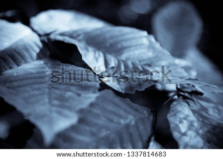 Grey Leaves Background