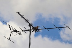 Grey pigeon sitting on suburban household antenna with blue sky and white cloud in background.