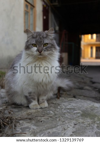 grey street cat sits on the ground. concept of yard animal near the old house #1329139769
