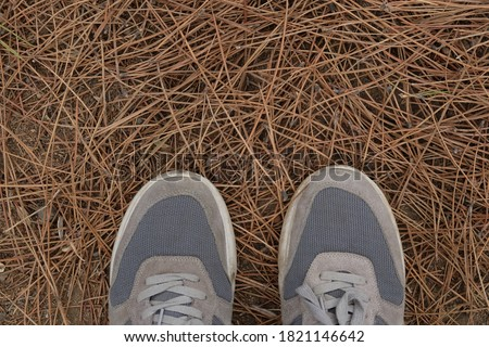grey two runner shoes on the brown pine needles in nature park, The view down on the feet in white and grey sneakers shoes, Selfie of woman feet in athletic outdoor shoes on dry pine leaves on forest. Stok fotoğraf ©