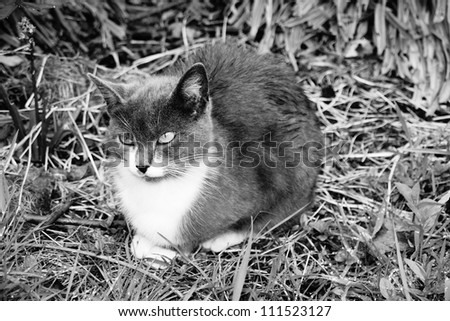 Grey-white cat