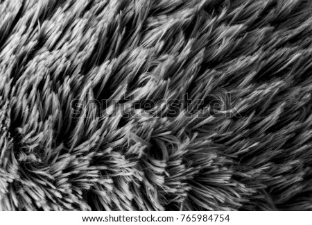 Grey  wool texture background, macro cotton wool, grey fleece, gray natural sheep wool, texture of dark fluffy fur, black white nappy long wool coat, dark carpet, close-up