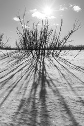 Greyscale abstract sunny winter day with shrubs, snow covered landscape, clouds, sun shining with grayscale theme. Taken in northern Canada during spring time.