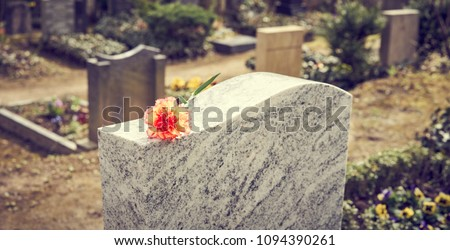 Grief at cemetery / Red carnation on gravestone / Tombstone - Shutterstock ID 1094390261