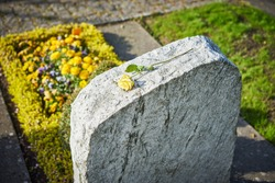 grief on cemetery / withered yellow rose on gravestone / sorrow about loss