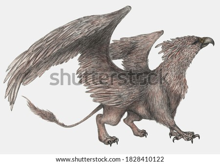 Griffin mythical creature pencil drawing Stock photo ©