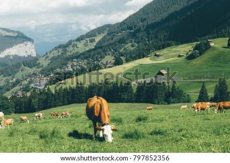 Grindelwald, Stunning Village in Mountain, Switzerland on the way to Jungfrau