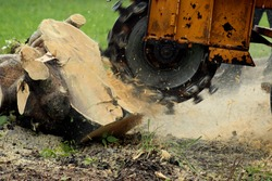 Grinding a Tree Stump for Removal