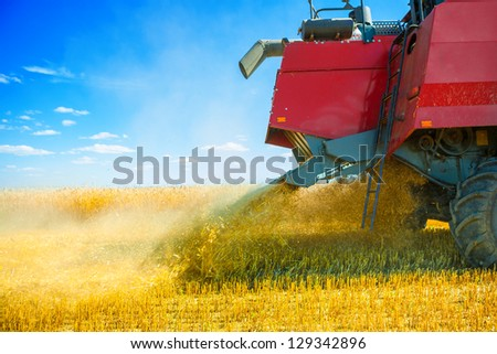 grinding of wheat at harvest