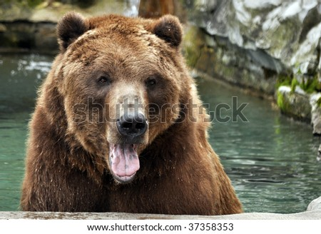 Grizzly bear sitting up - photo#15