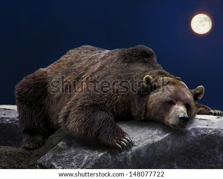 Grizzly brown bear sleeping on rock during full moon night