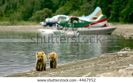 Grizzly cubs and float planes in Katmai National Park, Alaska
