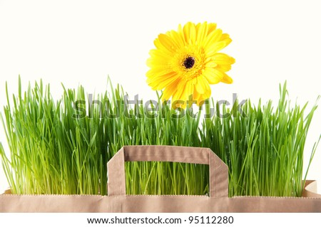 Grocery paper bag with Gerbera and green grass, isolated over white - stock photo