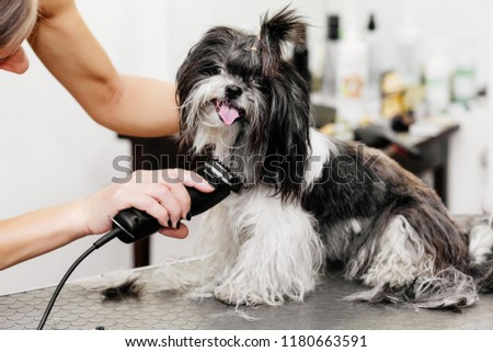 Groomer takes care of the dog's hair. The art of grooming. Element of grooming.