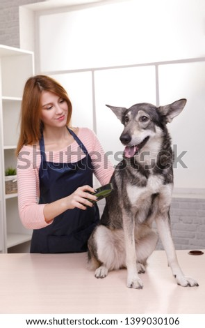 Grooming animals, grooming, drying and styling dog, combing wool. Grooming master cuts and shaves, cares for a dog.