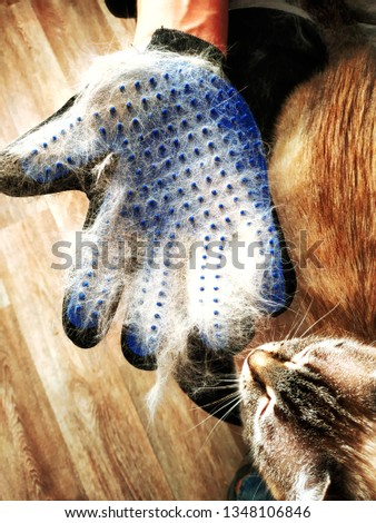 Grooming pets. grooming glove with cat hair. pet grooming tool. pet supplies and accessories. animal health care concept.