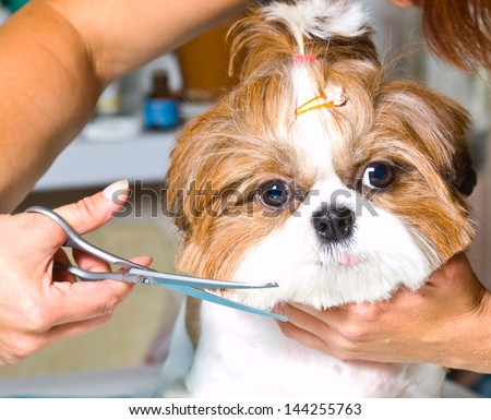 Dog Grooming Illustrations