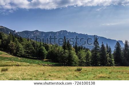 Gropsoarele-Zaganu peaks, Sightseeing from Red Mountain Cabin, Ciucas mountains Culmea Grop?oarele-Z?ganu (vedere dinspre Cabana Muntele Ro?u), Muntii Ciucas Imagine de stoc ©
