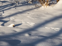 Ground covered with snow and footprints in snow of a hare in deep snow in sunlight after snowfall