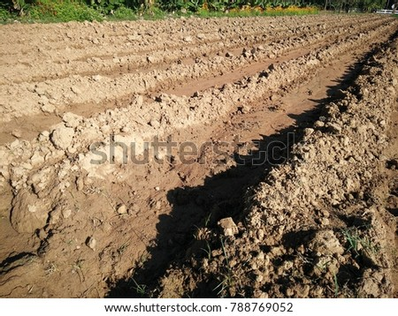 Ground for planting sunflower and corn.Soil and groove for planting.background and texture of land or soil.
