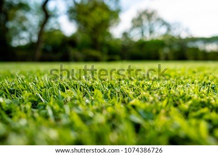 Ground level view of a recently cut and well maintained ornamental grass seen just after a summer rain shower. Some small water droplets can be seen on this very shallow focus of the grass blades. Stock foto ©
