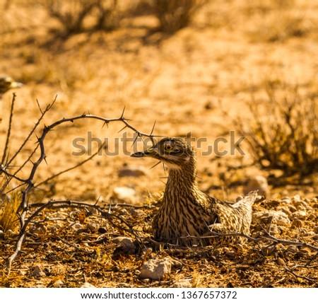 Ground nesting Avian animal #1367657372