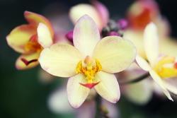 ground orchid flower
