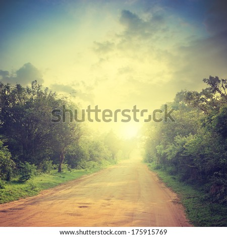 ground road and bush with savanna landscape background