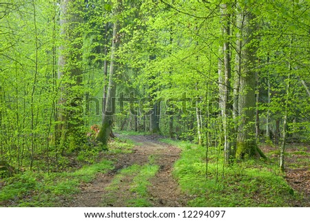Ground road crossing fresh green springtime forest and tree with tourist trail sign on it - stock photo