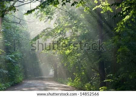 Ground road crossing old deciduous forest with beams of light entering