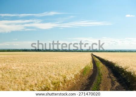 ground road in wheaten field. summer landscape