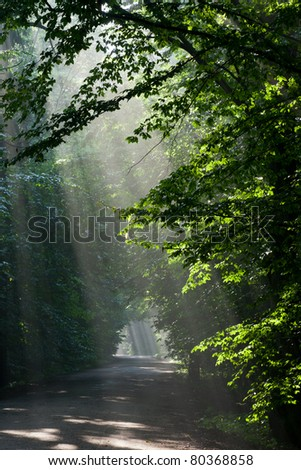 Ground road leading across old deciduous forest with beams of light entering stand