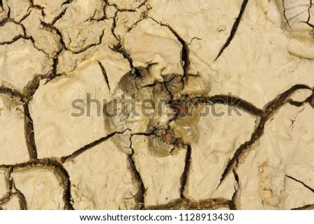 Ground with animal footprints. #1128913430
