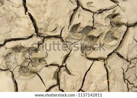Ground with animal footprints. #1137142811