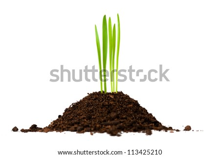 ground with green grass on a white background. isolated