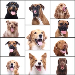 Group beautiful house pets in front of a white background
