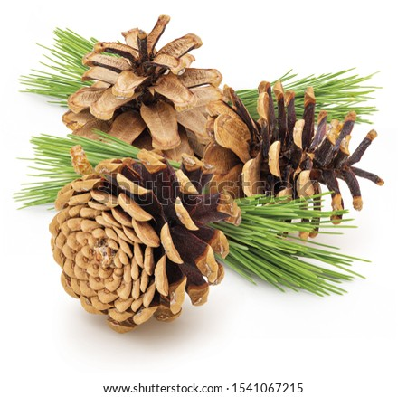 Group dried cones pine of wild pine. With green leaves Isolated on white background. Isolated on white background #1541067215