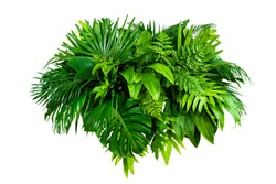 Group Green leaves tropical foliage plant bush of philodendron, dracaena and fern floral arrangment nature backdrop isolated on white background, clipping path included.