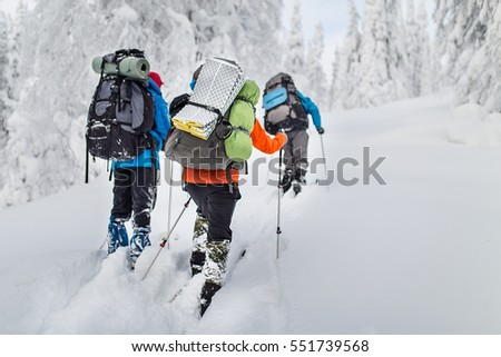 group hikers with backpacks and skis walk on a snow-covered forest in the mountains of the Urals