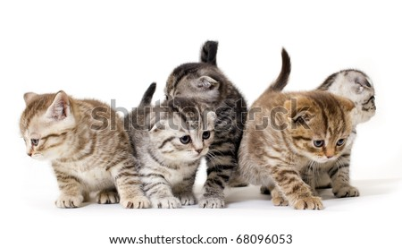 Group  kitties on white background #68096053