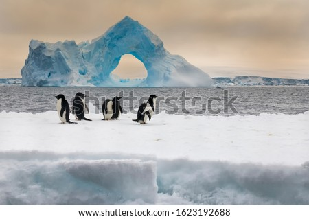 Group of Adelie penguins (Pygoscelis adeliae) on an iceberg, Natural arch iceberg in the background, Paulet Island, Erebus and Terror Gulf, Antarctic peninsula