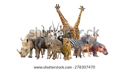 group of africa animals isolated on white background