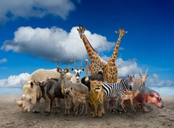 group of africa animals standing on the ground