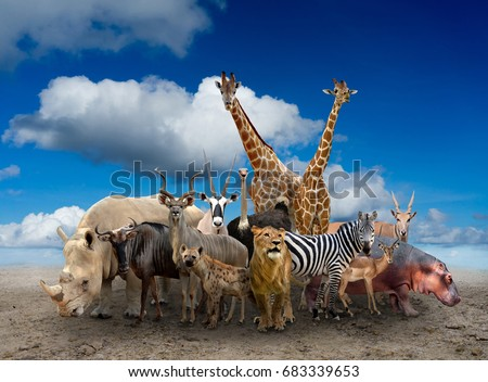 group of africa animals standing on the ground #683339653