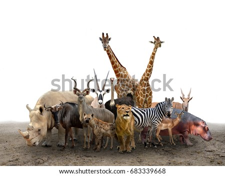 group of africa animals standing on the ground #683339668