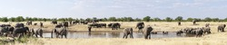 Group of African elephants at a waterhole in Etosha National Park./Herd of African elephants