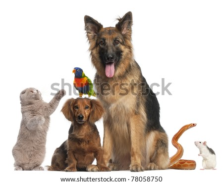 Group of animals in front of white background