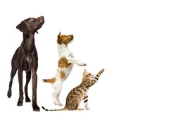group of animals look sideways on a white background