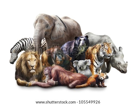 Group of animals on white background
