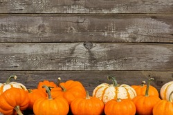 Group of autumn pumpkins and gourds against an old wood background